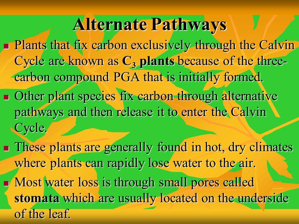 Alternate Pathways