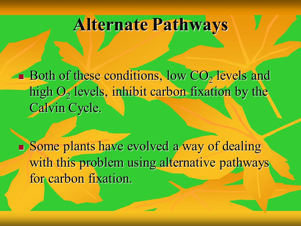 Alternate Pathways Both of these conditions, low CO2 levels and high O2 levels, inhibit carbon fixation by the Calvin Cycle.