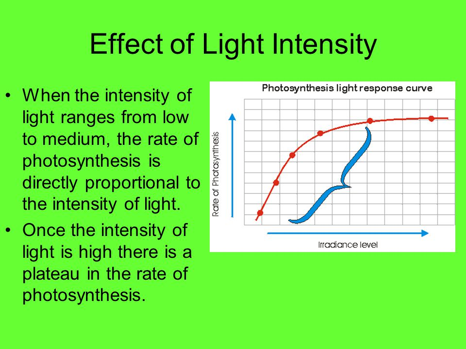 Effect of Light Intensity on Photosynthesis