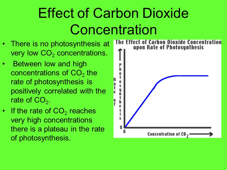 Effect Of Carbon Dioxide On Rate Of Photosynthesis Essay