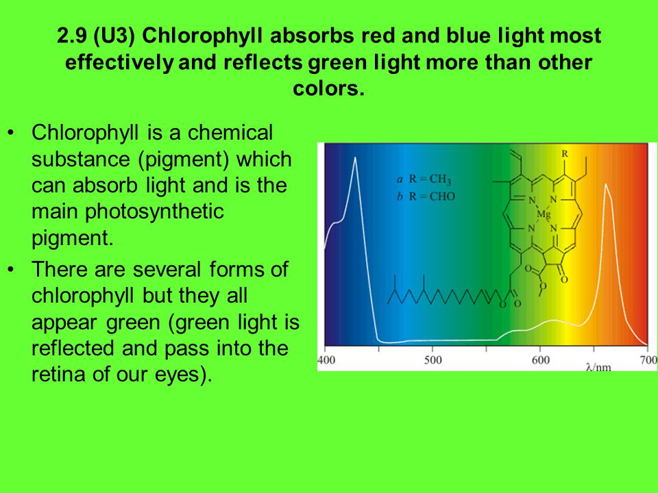 2.9 (U3) Chlorophyll absorbs red and blue light most effectively and reflects green light more than other colors.