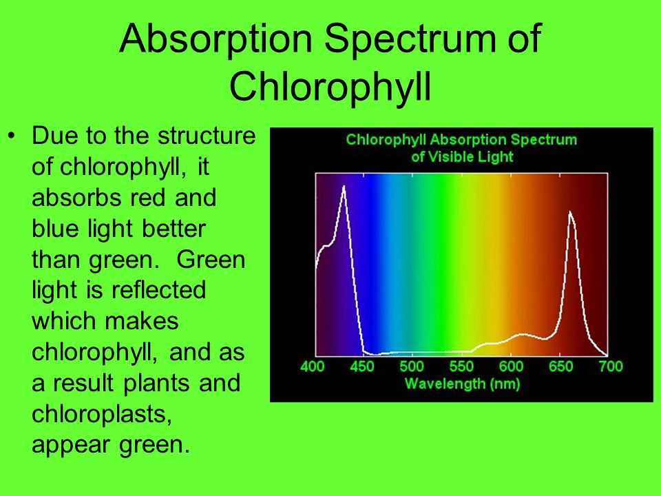 Absorption Spectrum of Chlorophyll