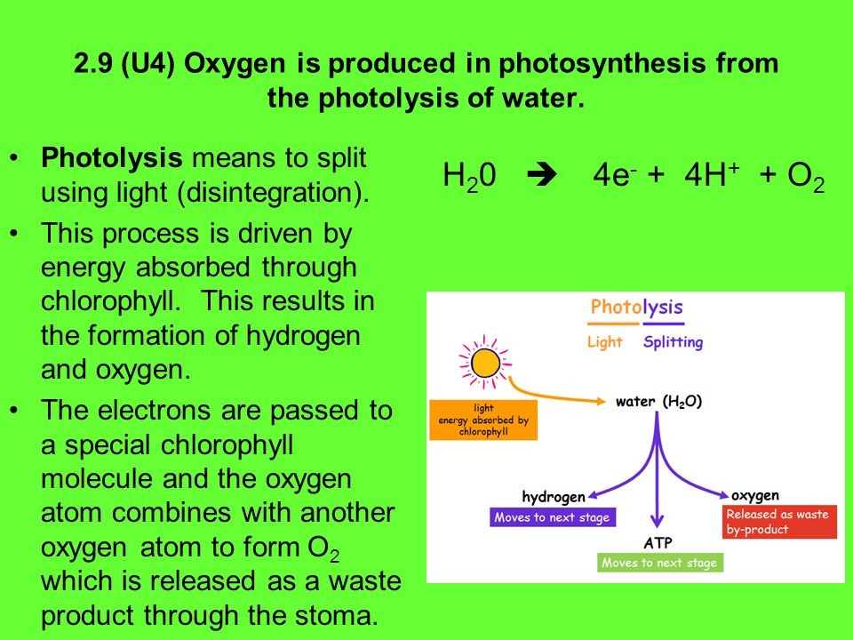 2.9 (U4) Oxygen is produced in photosynthesis from the photolysis of water.