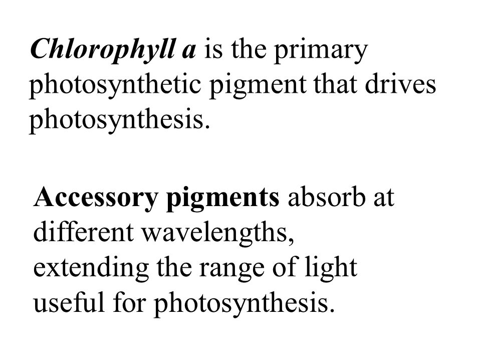 Chlorophyll a is the primary photosynthetic pigment that drives photosynthesis.