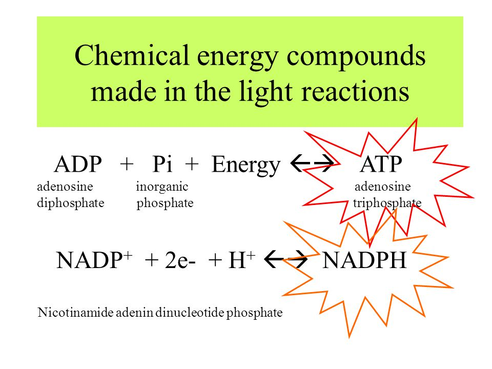 Chemical energy compounds made in the light reactions