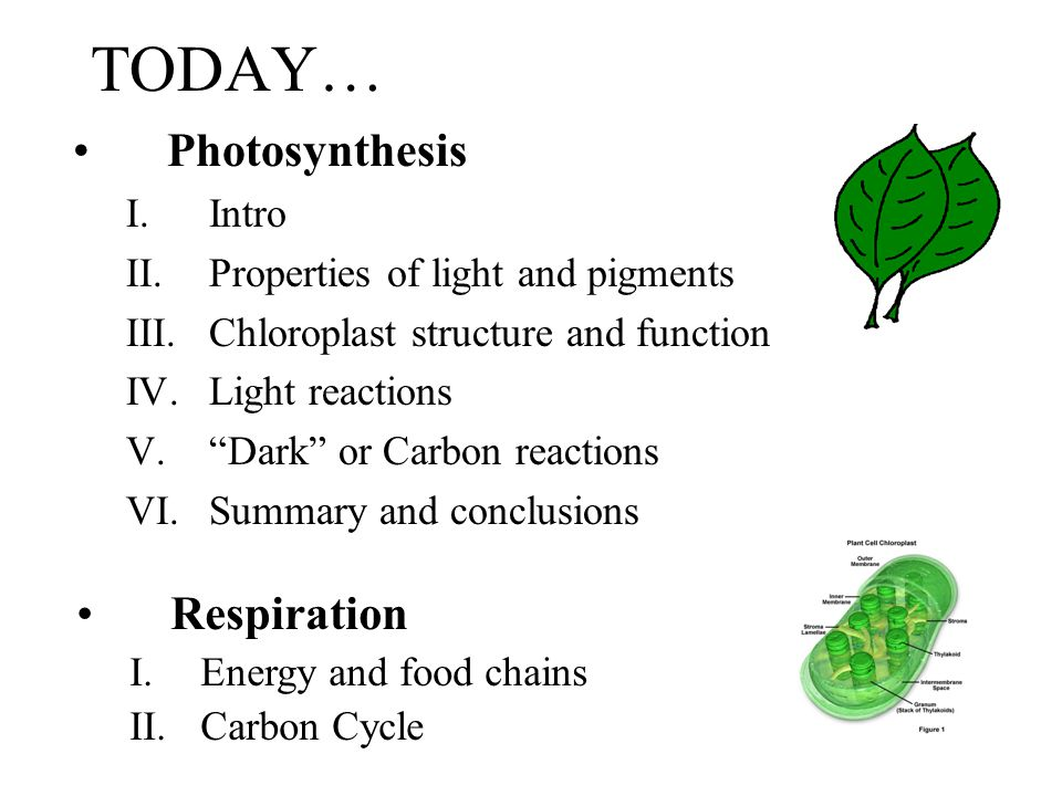 TODAY… Photosynthesis Respiration Intro