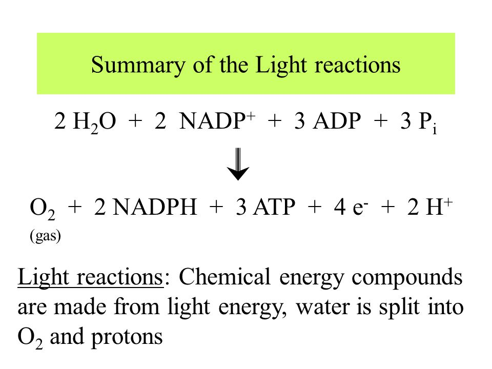 Summary of the Light reactions