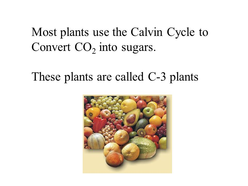 Most plants use the Calvin Cycle to