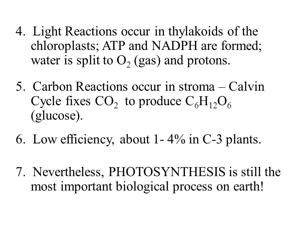 4. Light Reactions occur in thylakoids of the chloroplasts; ATP and NADPH are formed; water is split to O2 (gas) and protons.