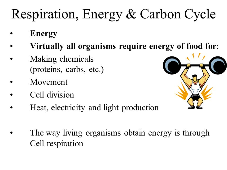 Respiration, Energy & Carbon Cycle