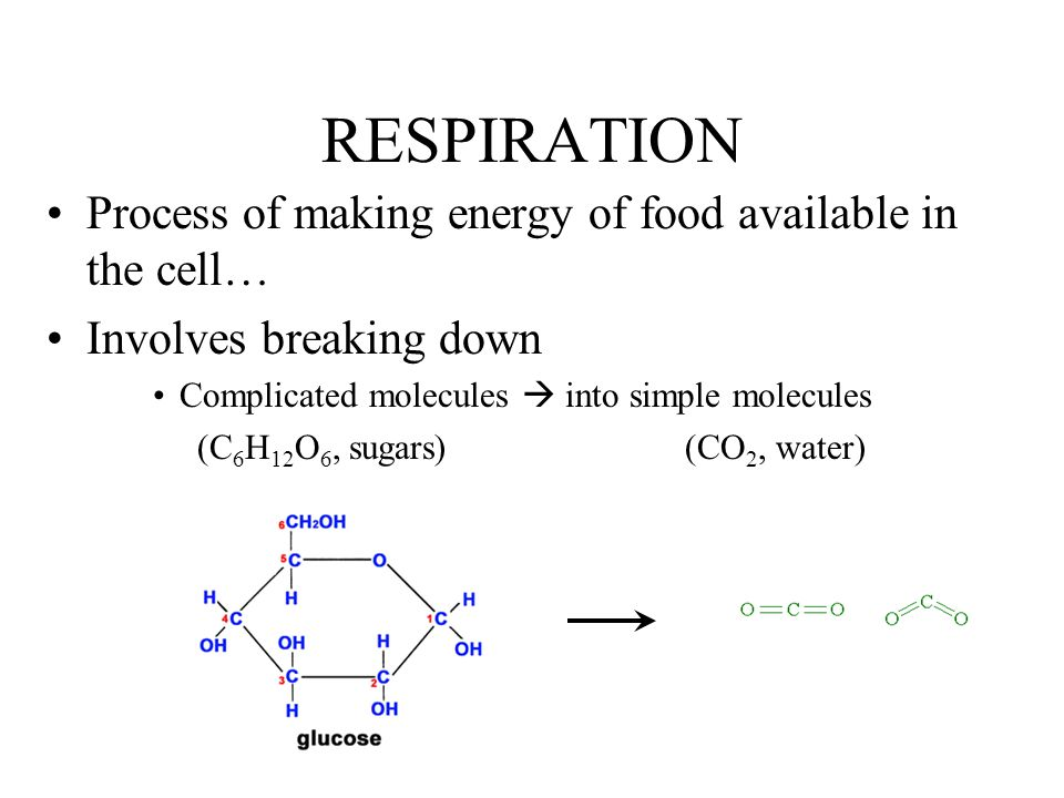 RESPIRATION Process of making energy of food available in the cell…
