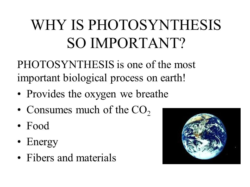 WHY IS PHOTOSYNTHESIS SO IMPORTANT