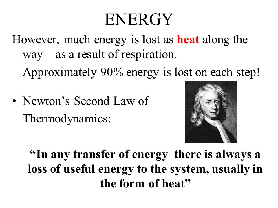 ENERGY However, much energy is lost as heat along the way – as a result of respiration. Approximately 90% energy is lost on each step!