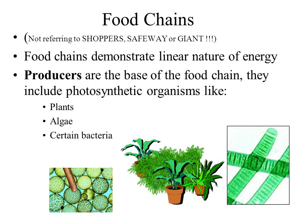 Food Chains (Not referring to SHOPPERS, SAFEWAY or GIANT !!!)