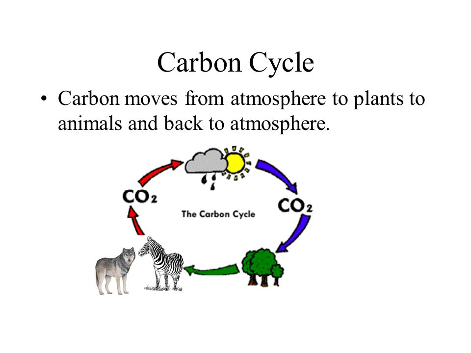 Carbon Cycle Carbon moves from atmosphere to plants to animals and back to atmosphere.