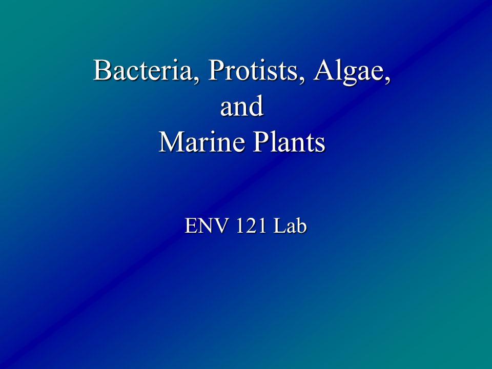 Bacteria, Protists, Algae, and Marine Plants