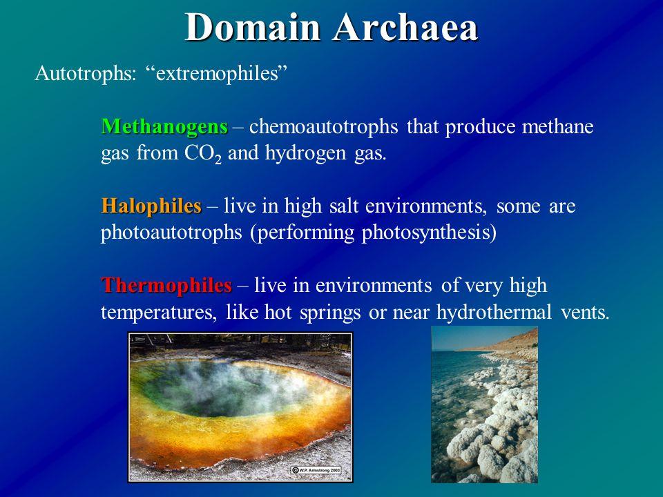 Domain Archaea Autotrophs: extremophiles