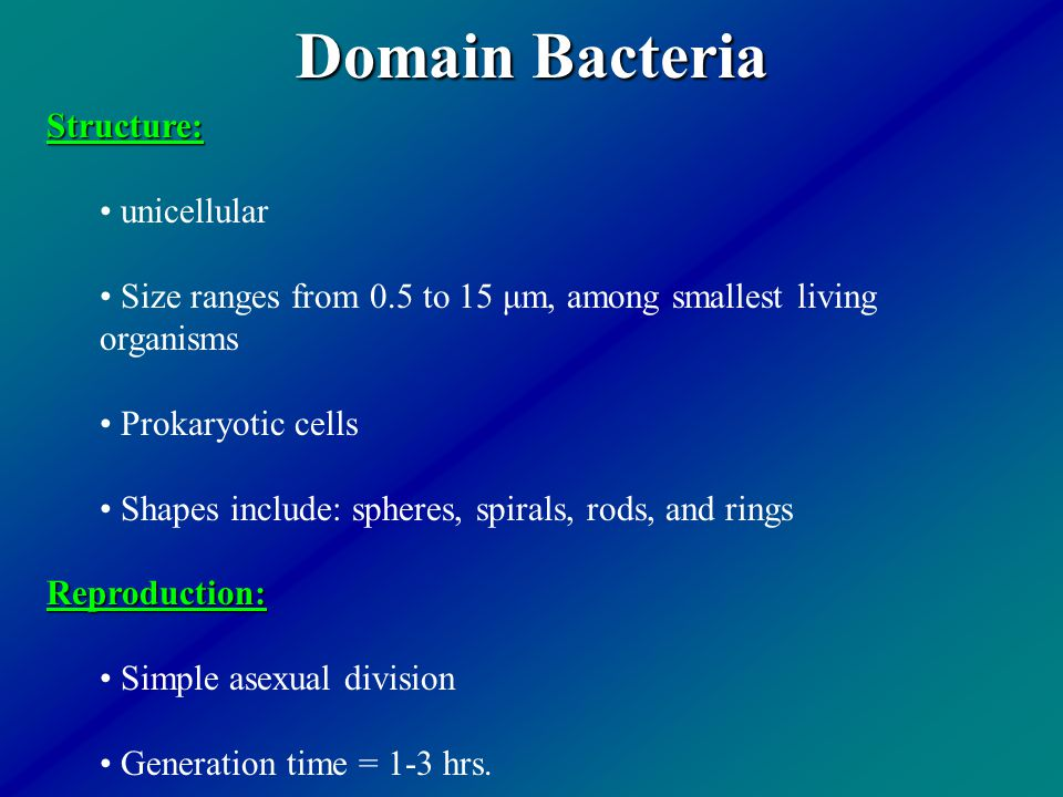 Domain Bacteria Structure: unicellular