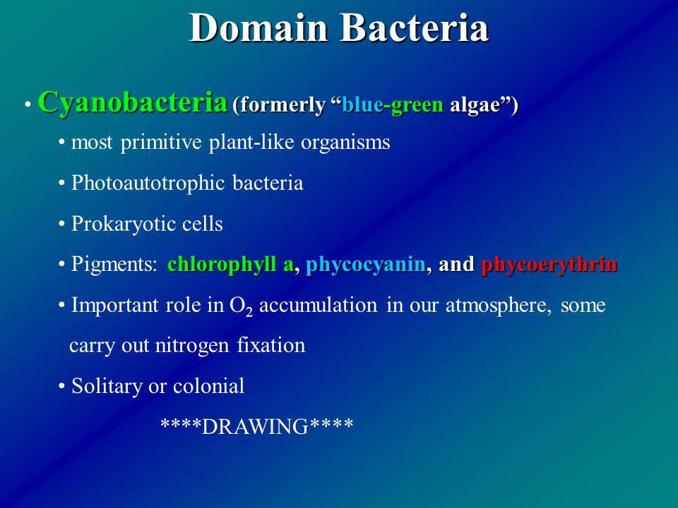 Domain Bacteria Cyanobacteria (formerly blue-green algae )