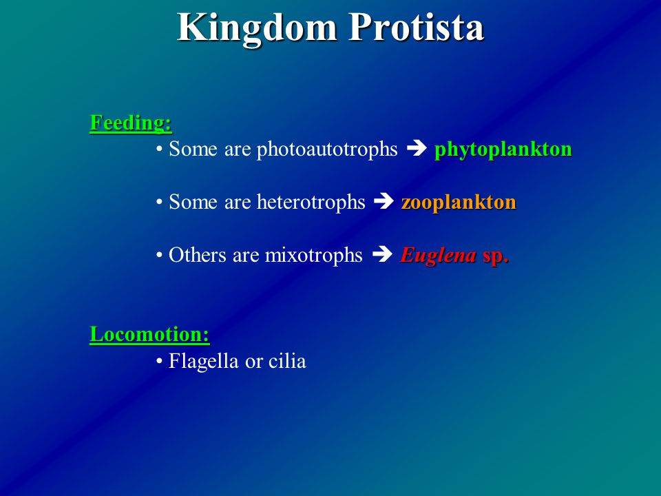 Kingdom Protista Feeding: Some are photoautotrophs  phytoplankton