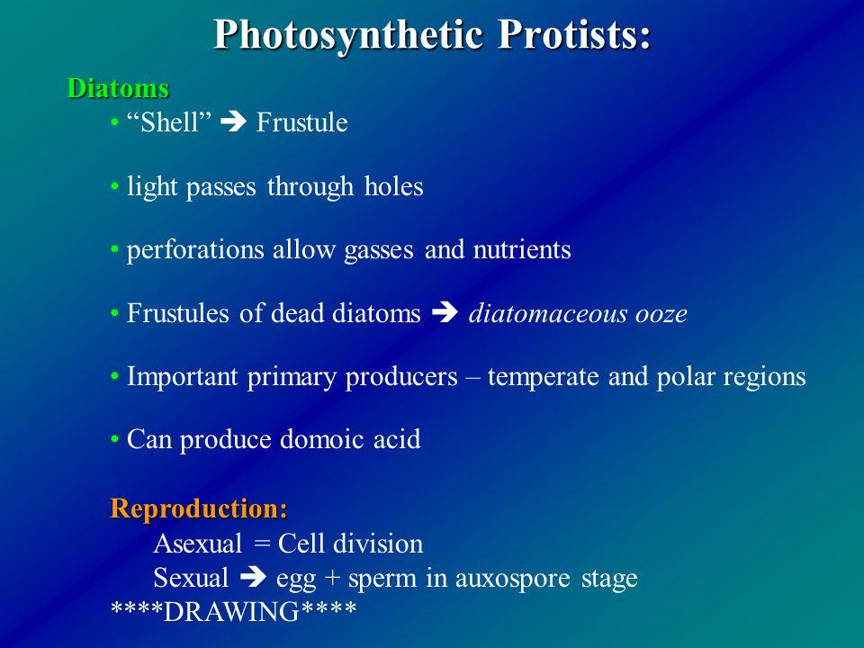 Photosynthetic Protists: