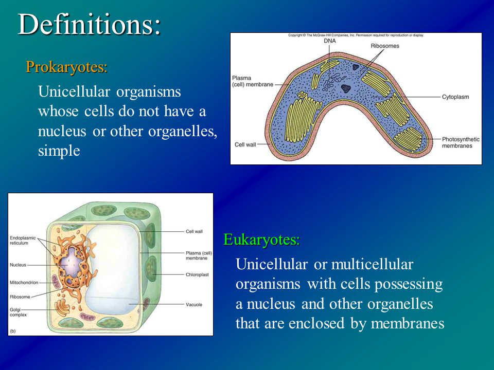 Definitions: Prokaryotes: