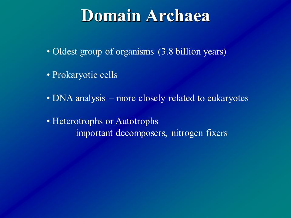 Domain Archaea Oldest group of organisms (3.8 billion years)