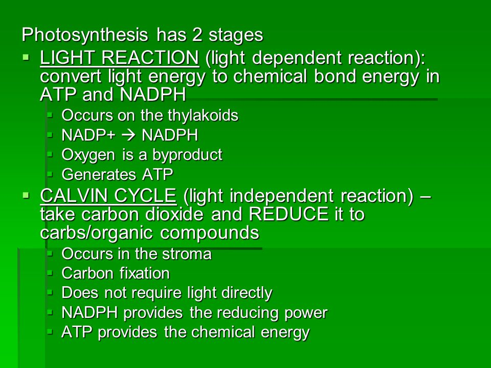 Photosynthesis has 2 stages