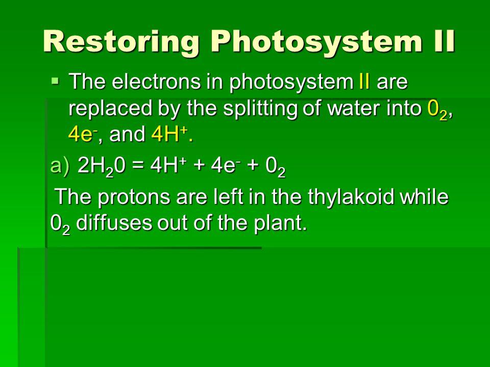 Restoring Photosystem II