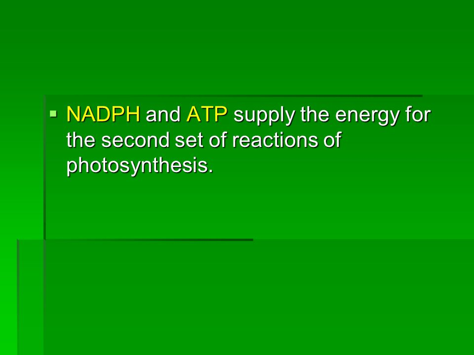 NADPH and ATP supply the energy for the second set of reactions of photosynthesis.