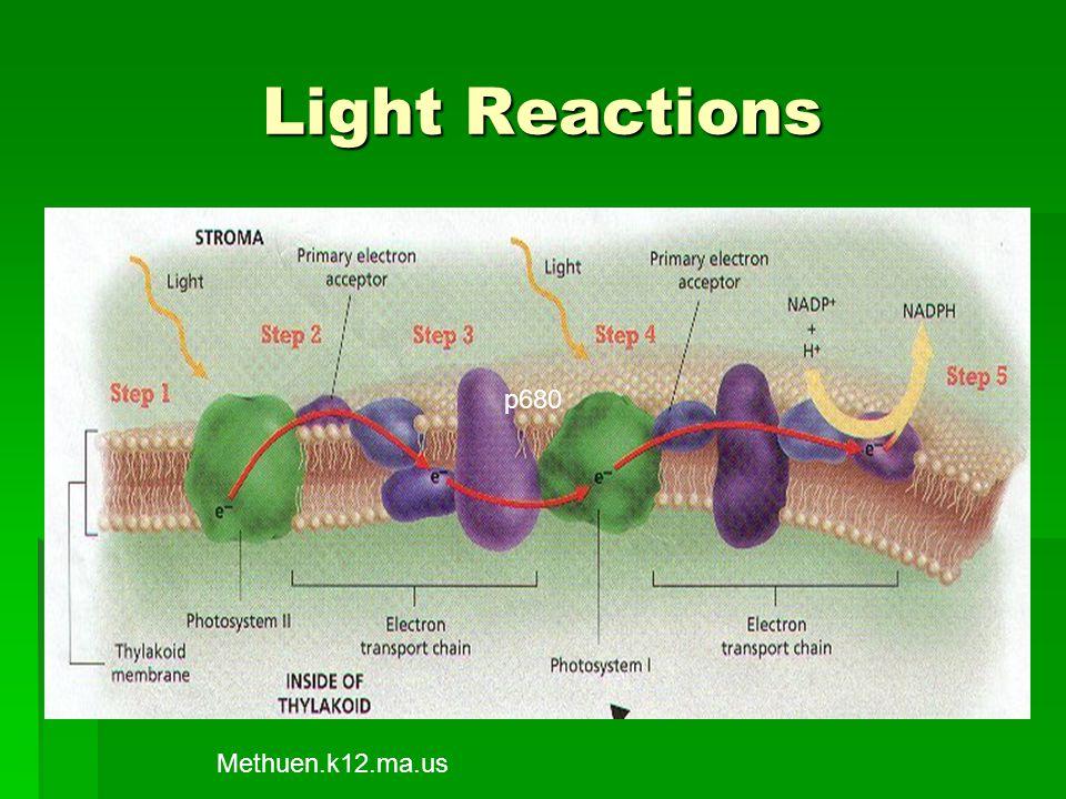 Light Reactions p680 p680 Methuen.k12.ma.us