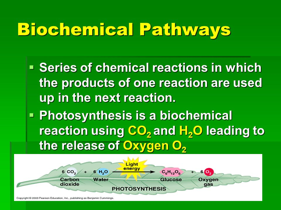 Biochemical Pathways Series of chemical reactions in which the products of one reaction are used up in the next reaction.