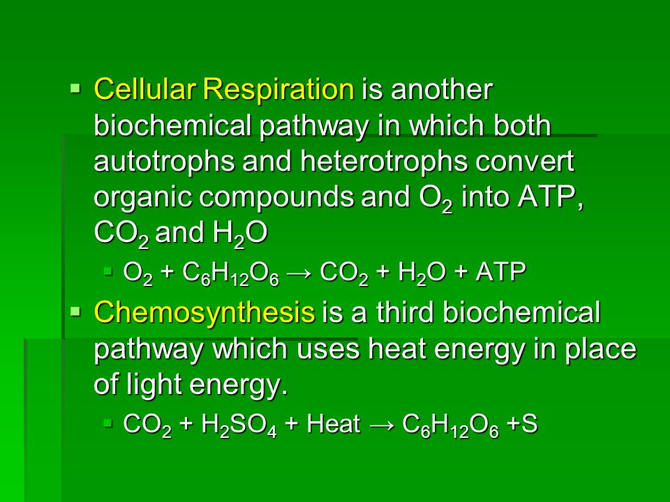 Cellular Respiration is another biochemical pathway in which both autotrophs and heterotrophs convert organic compounds and O2 into ATP, CO2 and H2O
