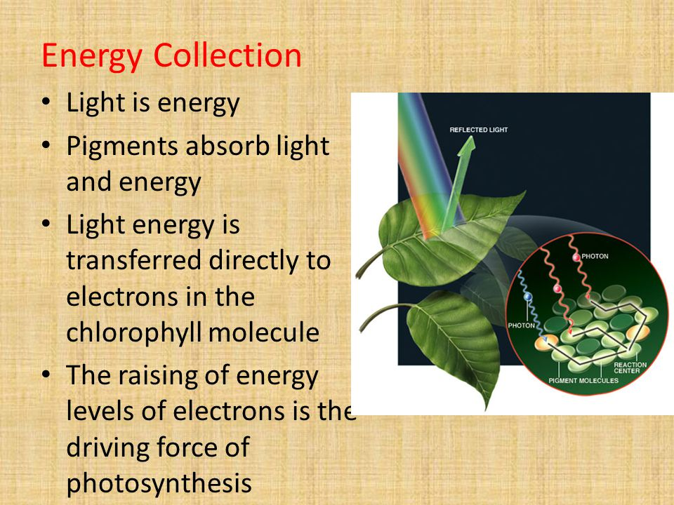 Energy Collection Light is energy Pigments absorb light and energy