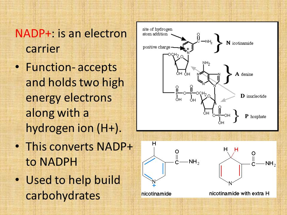 NADP+: is an electron carrier
