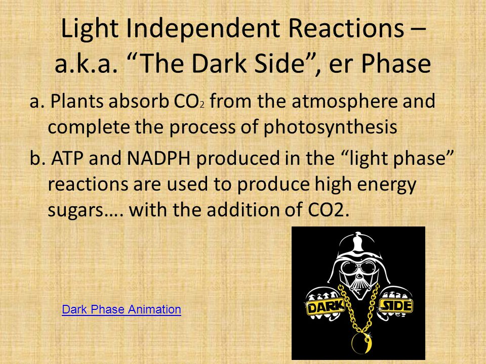 Light Independent Reactions – a.k.a. The Dark Side , er Phase