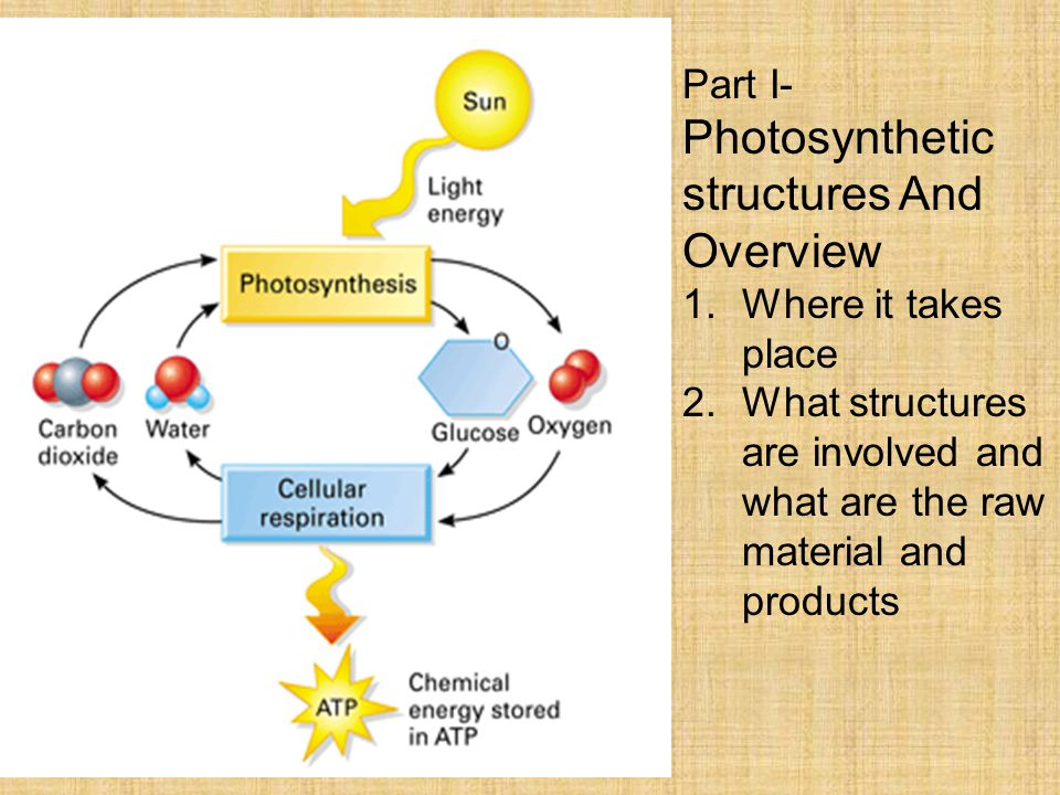 Part I- Photosynthetic structures And Overview