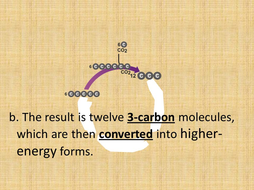 b. The result is twelve 3-carbon molecules, which are then converted into higher-energy forms.
