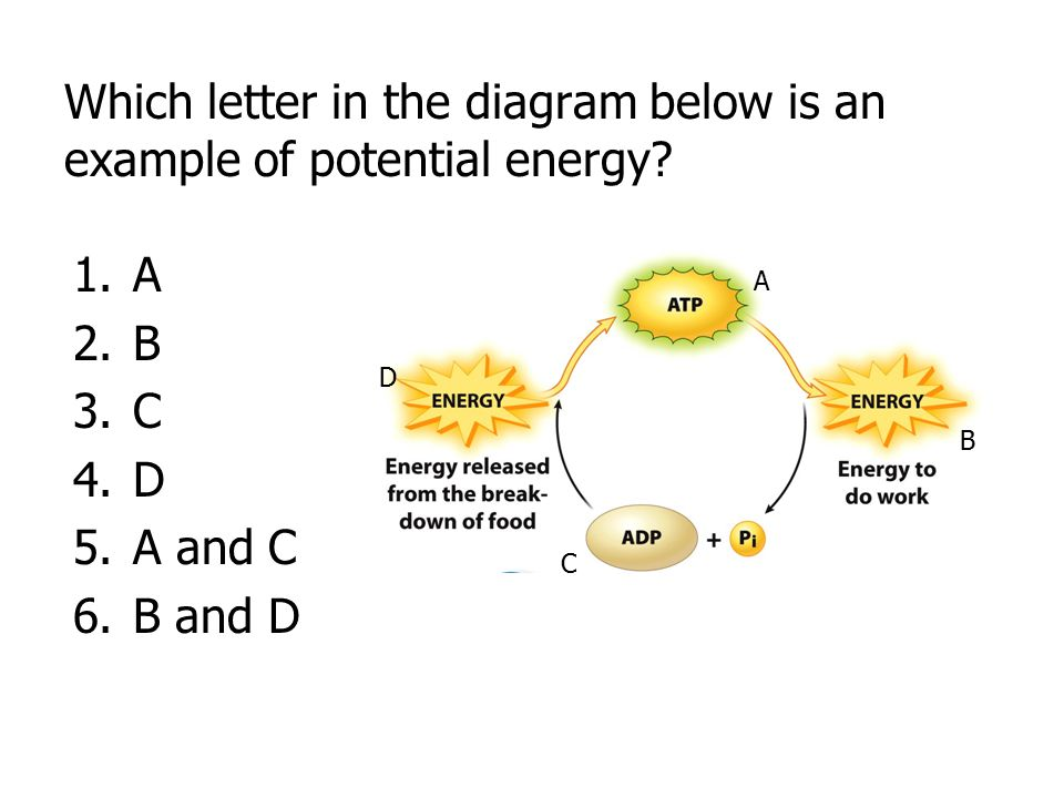 Which letter in the diagram below is an example of potential energy