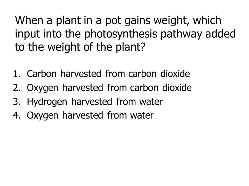 When a plant in a pot gains weight, which input into the photosynthesis pathway added to the weight of the plant