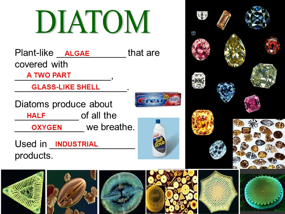 DIATOM Plant-like _____________ that are covered with __________________, _____________________.
