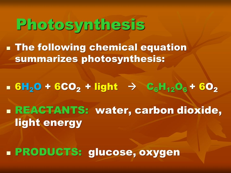 Photosynthesis REACTANTS: water, carbon dioxide, light energy