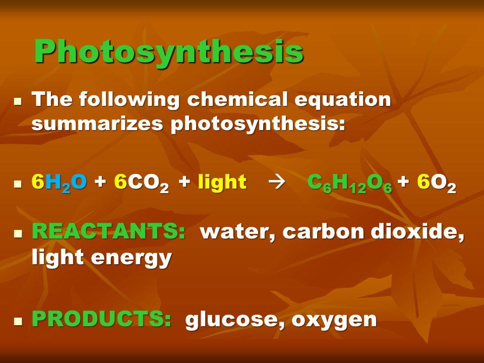 Photosynthesis REACTANTS: water, carbon dioxide, light energy