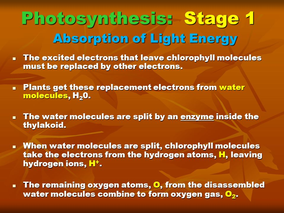 Photosynthesis: Stage 1