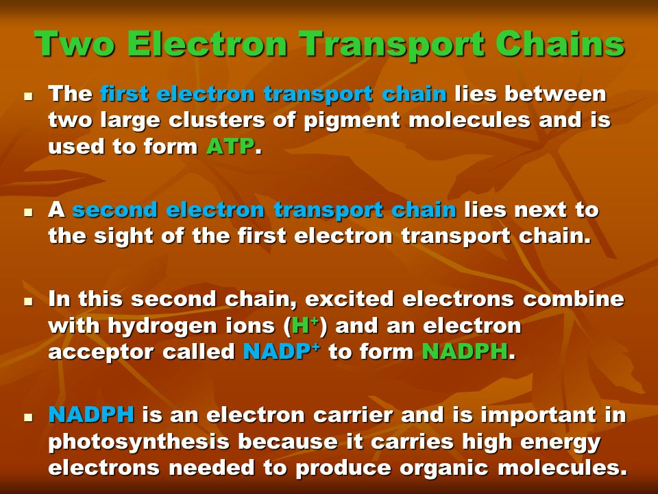 Two Electron Transport Chains