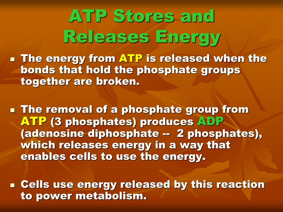 ATP Stores and Releases Energy