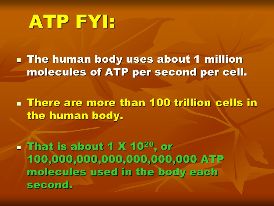 ATP FYI: The human body uses about 1 million molecules of ATP per second per cell. There are more than 100 trillion cells in the human body.