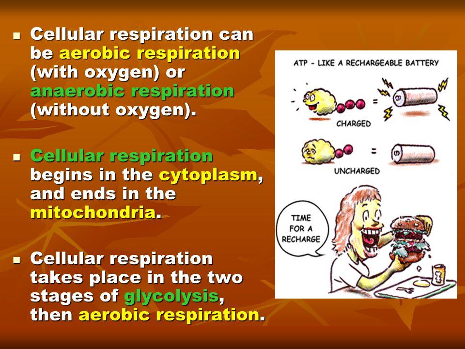 Cellular respiration can be aerobic respiration (with oxygen) or anaerobic respiration (without oxygen).