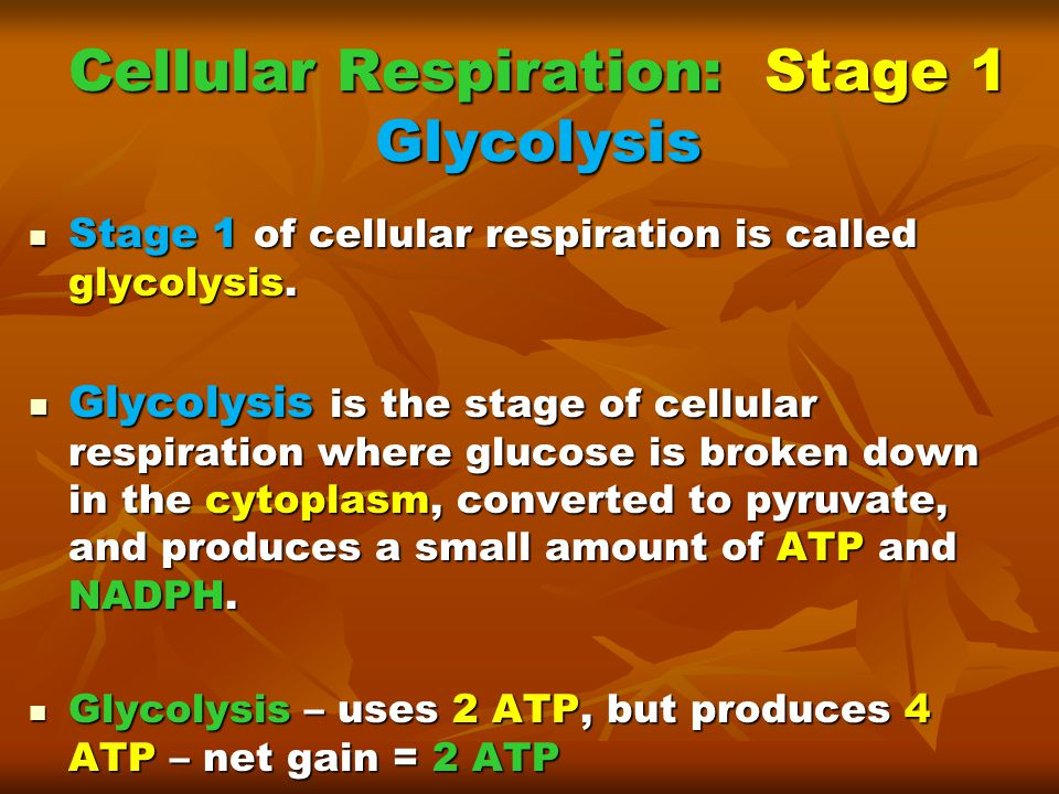 Cellular Respiration: Stage 1 Glycolysis