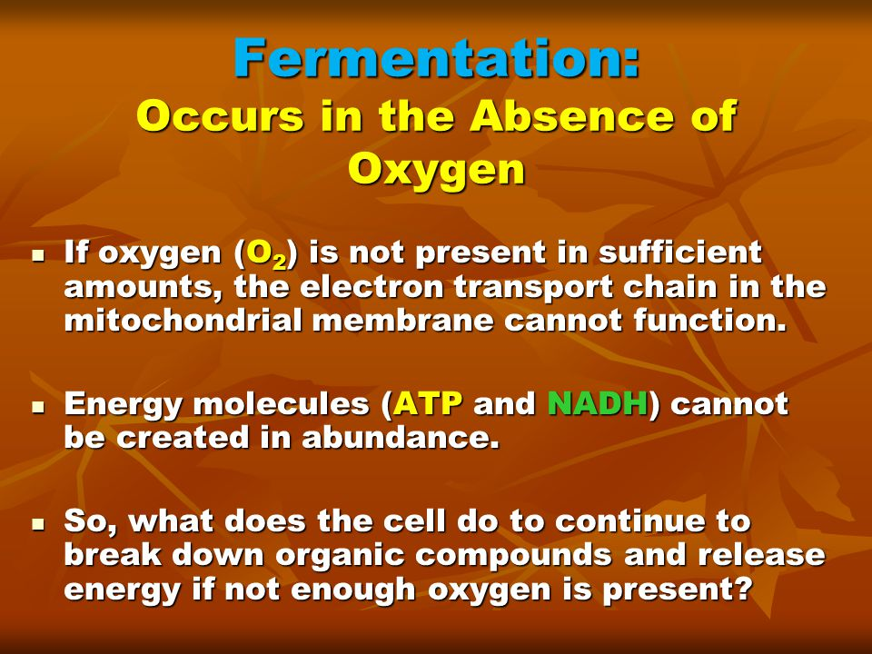 Fermentation: Occurs in the Absence of Oxygen